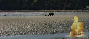 Кадр из Медведи