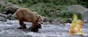 Кадр из Земля медведей