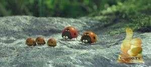 Кадр из Букашки. Приключения в Долине муравьев