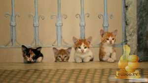 Кадр из Город кошек